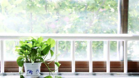 Luz solar, vaso de flores, janela