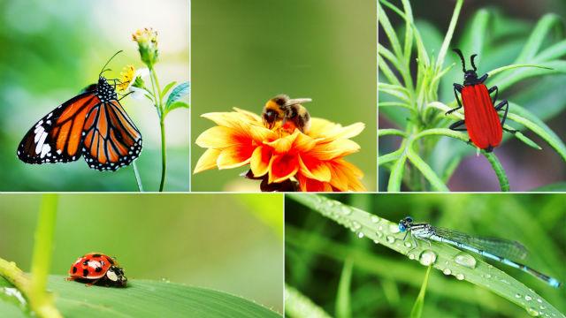 (Gênesis 1:24-25), insetos, borboletas, libélulas, abelhas, folhas, grama