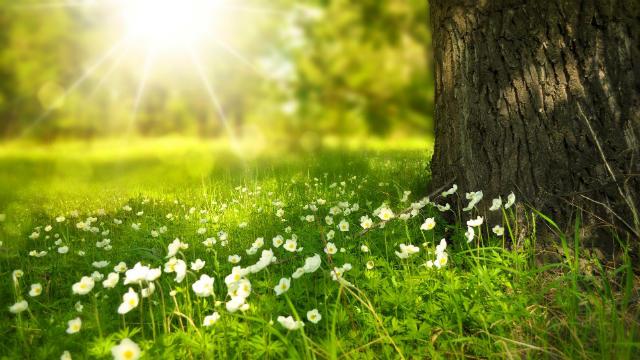 O ambiente básico de vida que Deus cria para a humanidade: a luz